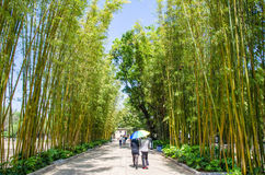 Bamboo grove island which is one of the scenic area in Green Lake Park Cui Hu Park. Stock Image