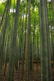 Bamboo grove arashiyama, Japan Royalty Free Stock Photos
