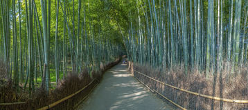 Bamboo grove in Kyoto Royalty Free Stock Image