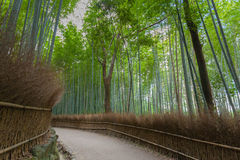 Bamboo forest in Kyoto Stock Photography