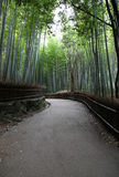 Bamboo Grove - Kyoto Japan. Empty path leading through a Bamboo forest - Arashiyama district in Kyoto Japan Royalty Free Stock Image