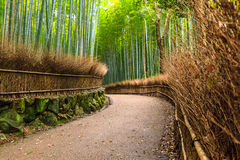 Bamboo Grove Stock Images