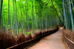 Bamboo grove in Kyoto, Japan stock photo