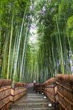 Bamboo Grove in Kyoto Japan. Kyoto, Japan - green bamboo grove in Arashiyama Royalty Free Stock Photo