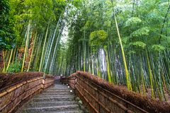 Bamboo Grove in Kyoto Japan Stock Image
