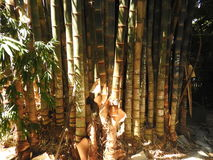 Bamboo. stock photo