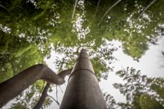 Bamboo Stalk Reaching Into Sky Stock Images