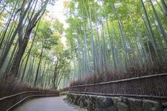Bamboo Grove panorama in Arashiyama, Kyoto, Japan Stock Photo