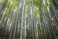 Bamboo Grove panorama in Arashiyama, Kyoto, Japan Royalty Free Stock Photo