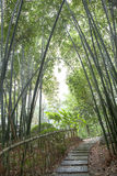 Bamboo grove path Stock Photography