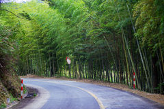Bamboo grove by the road Royalty Free Stock Image