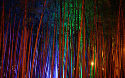 Bamboo grove. Bamboo trunks, illuminated with colored lights Royalty Free Stock Photo