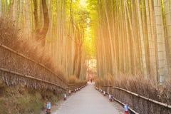 Bamboo grove with walking way. Arashiyama Kyoto Japan Stock Photos