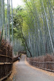Bamboo grove walkway Stock Photo