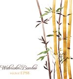 Bamboo grove Stock Photo