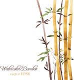 Bamboo grove. Watercolor bamboo grove, hand drawn vector illustration Stock Photo