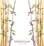 Bamboo grove. Watercolor bamboo grove, hand drawn vector illustration Royalty Free Stock Photos