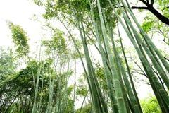 Bamboo groves Royalty Free Stock Photos