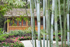 Bamboo groves and hut Stock Image