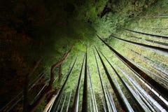 Bamboo groves at night Royalty Free Stock Image