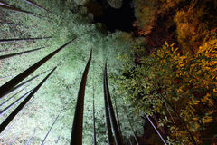 Bamboo groves at night Stock Photos