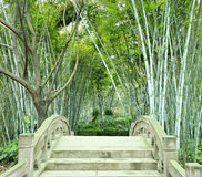 The bamboo groves and small bridge Royalty Free Stock Image