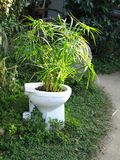 Bamboo growing form toilet at Lamma Island HK royalty free stock photo