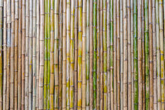 Bamboo half fence, nature texture for background Royalty Free Stock Images
