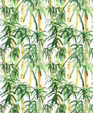 Bamboo hand drawn Royalty Free Stock Images