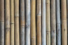 A wall made of bamboo royalty free stock photo