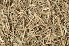 Bamboo hay stack dry in autumn , forest bamboo leaved textured brown color background . stock image