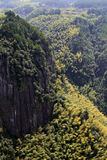 The bamboo on the hillside. In a piece of bamboo on the hillside Royalty Free Stock Image