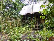Bamboo house at Eden stock photos