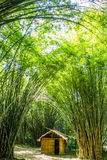 Bamboo house Royalty Free Stock Images