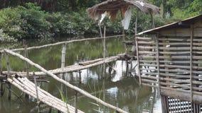 Nipa bamboo bridge and hut on fish pond. Bamboo hut and bamboo bridge inside man-made fish pond stock footage