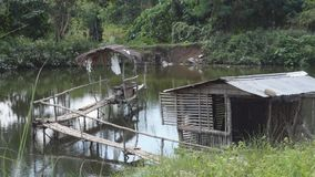 Bamboo Bridge over Fish Pond. Bamboo hut and bamboo bridge inside man-made fish pond stock video footage