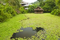 Bamboo hut in green pond Stock Photos