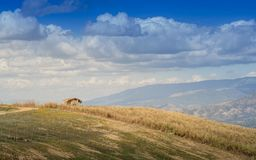 Bamboo hut on the hills, meadows with his sky and clouds Stock Photo
