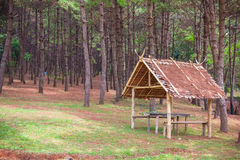 Bamboo hut in the pine forest for resting and relaxing Royalty Free Stock Photography