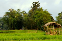 Bamboo hut. Small hut in the middle of paddies fields for farmer to take some rest Stock Photos