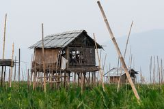 Bamboo hut on Taunggyi floating vegetable gardens of Inle lake, Myanmar. Shabby bamboo hut on Taunggyi floating vegetable gardens of Inle lake, Myanmar, wetlands royalty free stock images