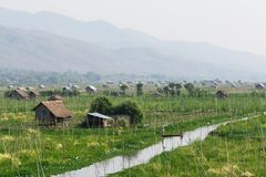 Bamboo huts on Taunggyi floating vegetable gardens of Inle lake, Myanmar. Shabby bamboo huts on Taunggyi floating vegetable gardens of Inle lake, Myanmar stock photo
