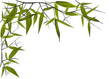 Bamboo illustration. For your text Stock Photo
