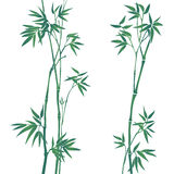 Bamboo illustration Stock Images