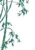Bamboo illustration Stock Photography