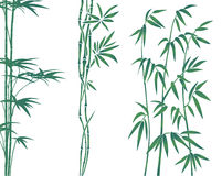 Bamboo illustration Stock Photos