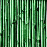 Bamboo Illustration Royalty Free Stock Images
