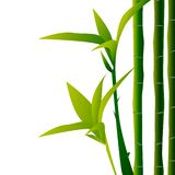 Bamboo illustration. Design for prints, asian spa and massage, cosmetics package, materials. vector illustration