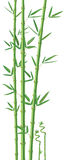 Bamboo illustration royalty free stock image