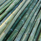 Bamboo for industry construction Stock Images